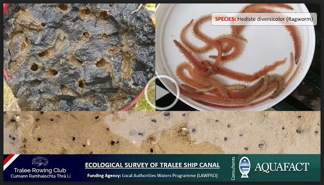 ecological survey presentation